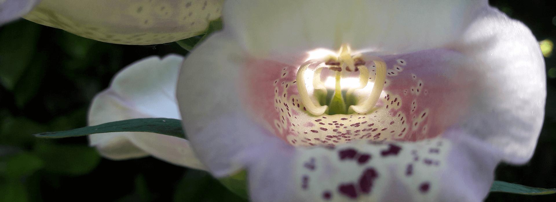 fleur-medicaments-douce-PHARMACIE (1)